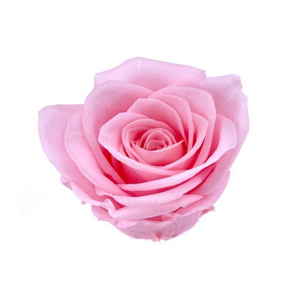 玫瑰保鮮花永生花-淺粉5-6CM