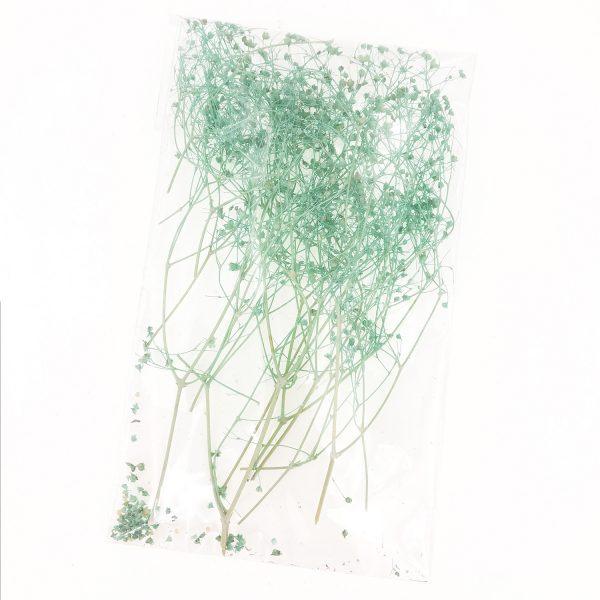 淺綠色滿天星乾花
