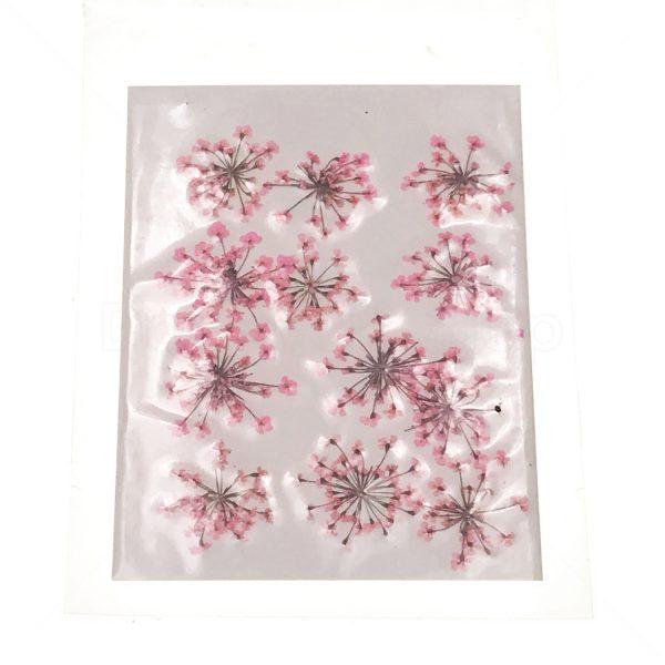 粉紅色雪珠花乾花押花