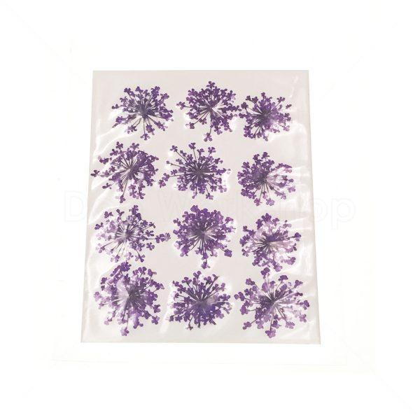 紫色雪珠花乾花押花