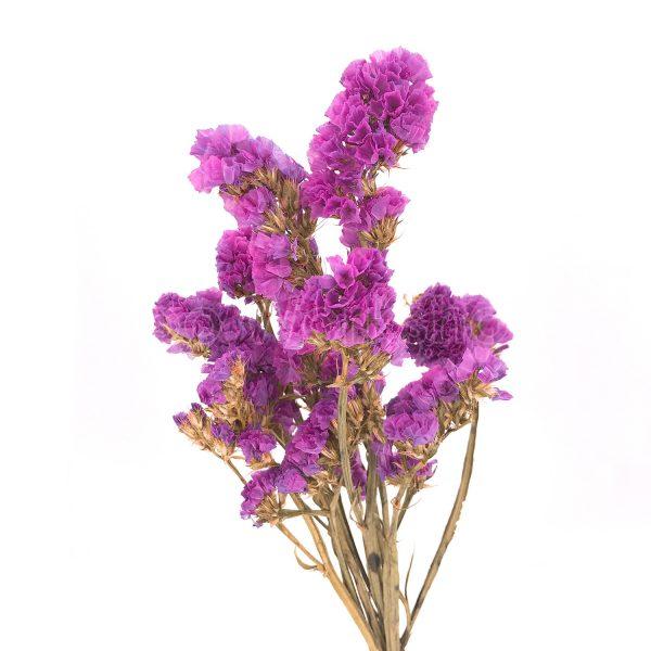 粉紫色勿忘我乾花