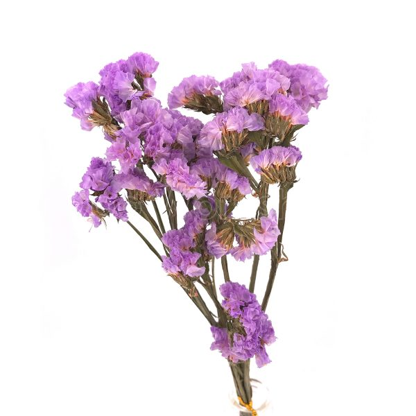 淺紫色勿忘我乾花