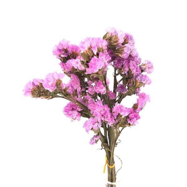 粉紅色勿忘我乾花