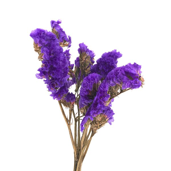 紫色勿忘我乾花