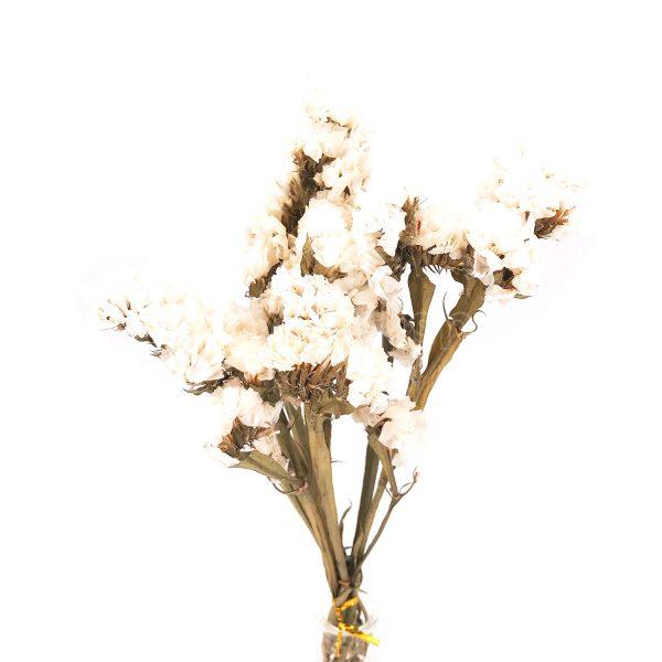 白色勿忘我乾花