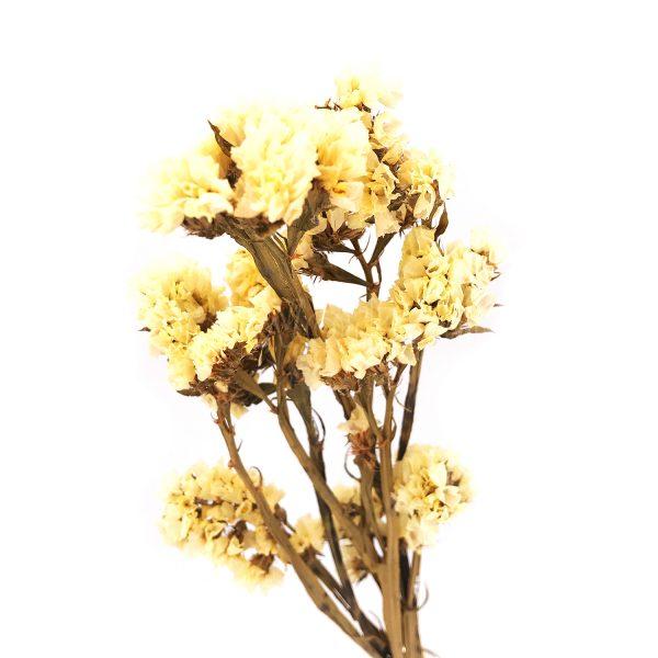 黃色勿忘我乾花