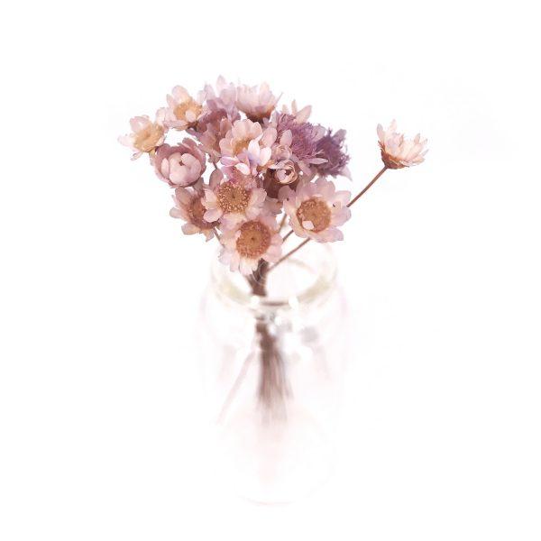 淺紫色小星花乾花